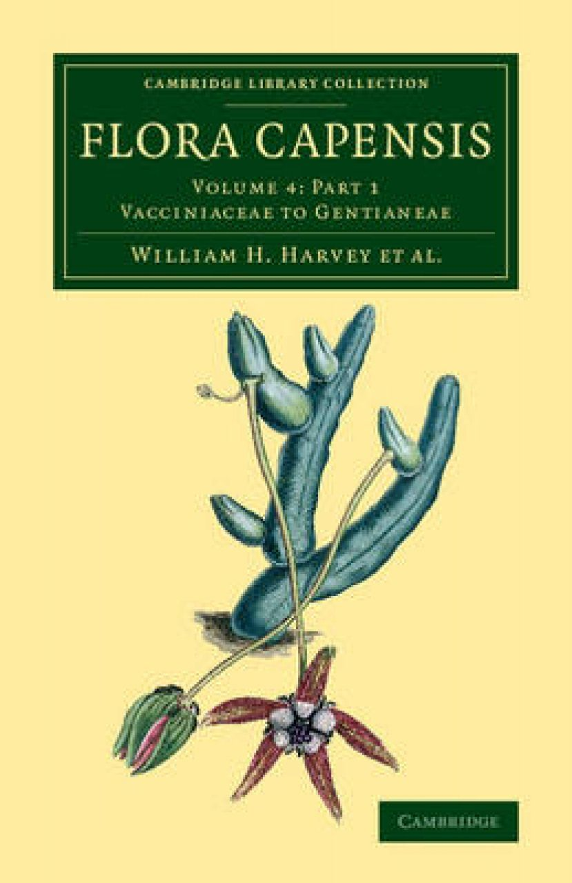 Flora Capensis, Volume 4, Part 1: Vacciniaceae to Gentianeae