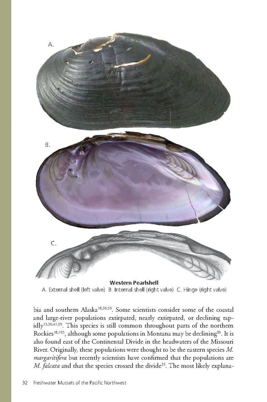 Freshwater Mussels of the Pacific Northwest: Ethan Jay Nedeau, Allan ...