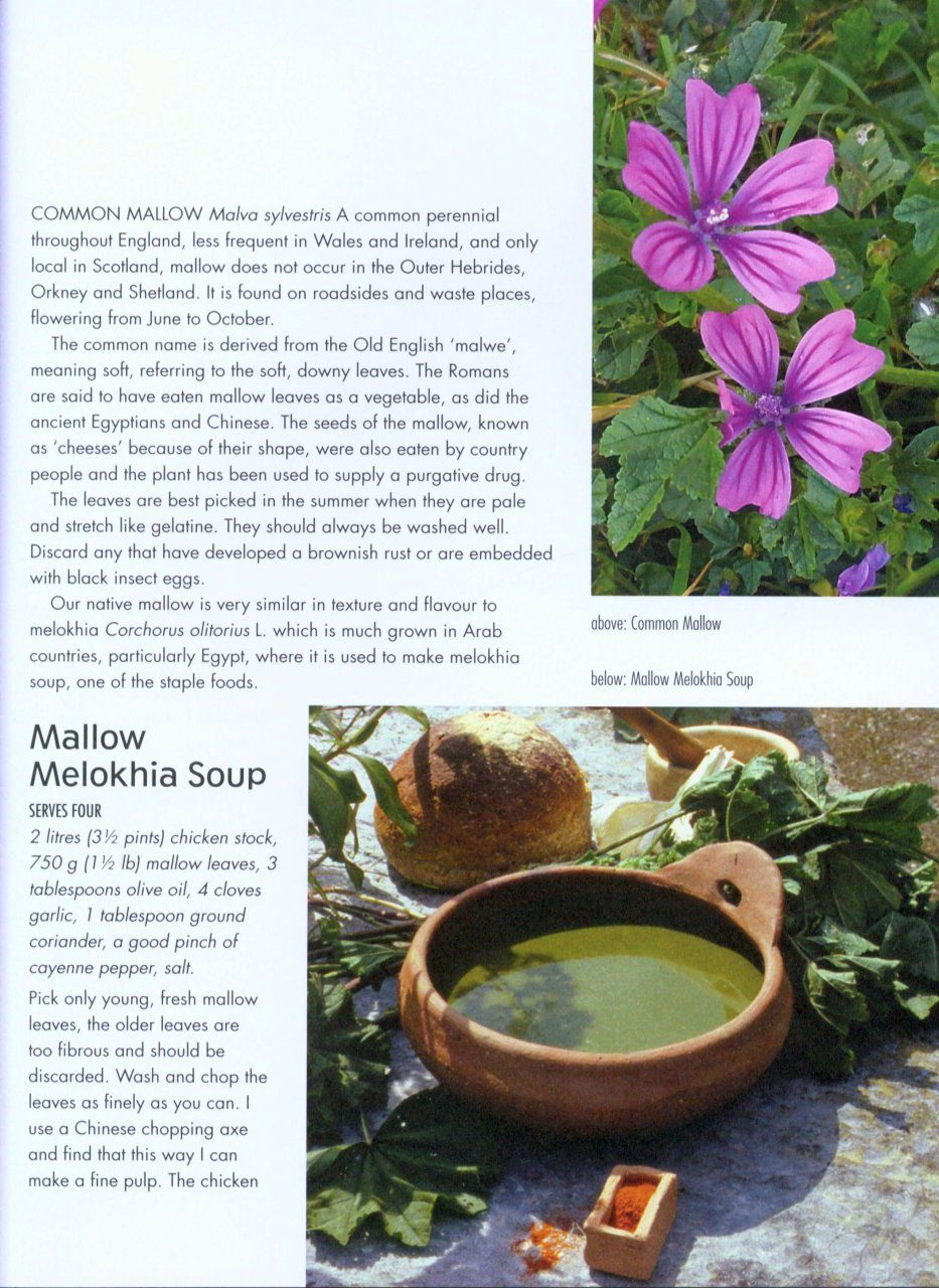 Wild Food: A Complete Guide for Foragers: Roger Phillips | NHBS Book ...
