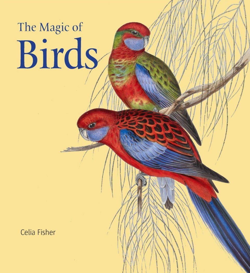 The Magic of Birds