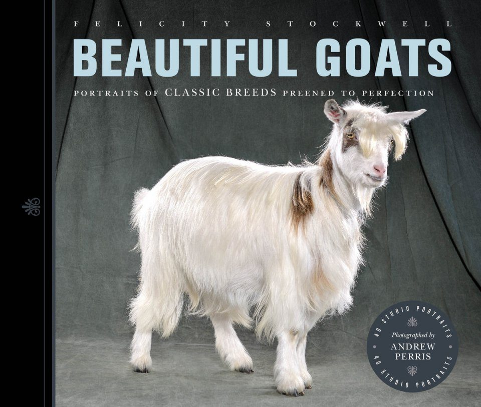 Beautiful Goats