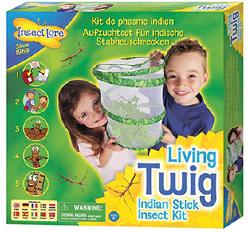 Living Twig Stick Insect Kit