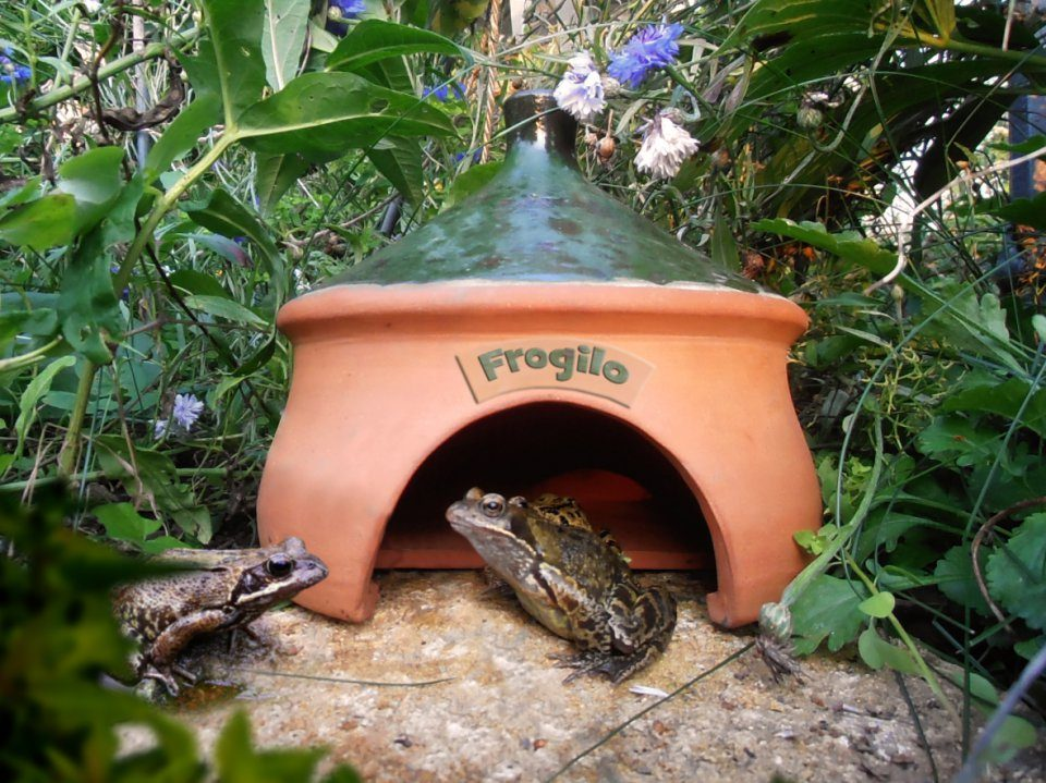 Frogilo Frog And Toad House Frogilo Frog And Toad House ...