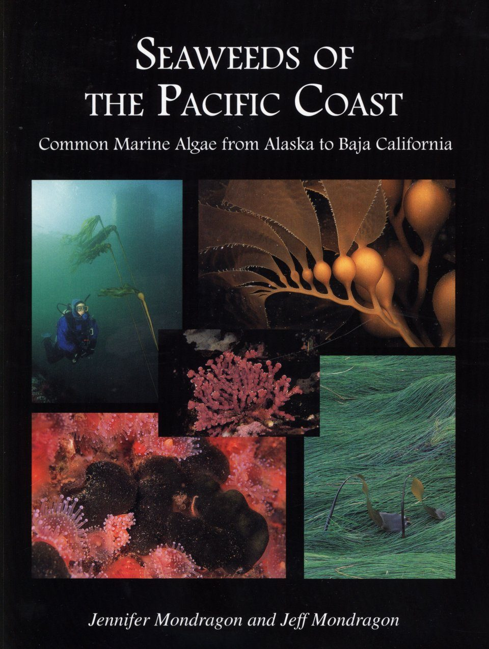 Seaweeds of the Pacific Coast