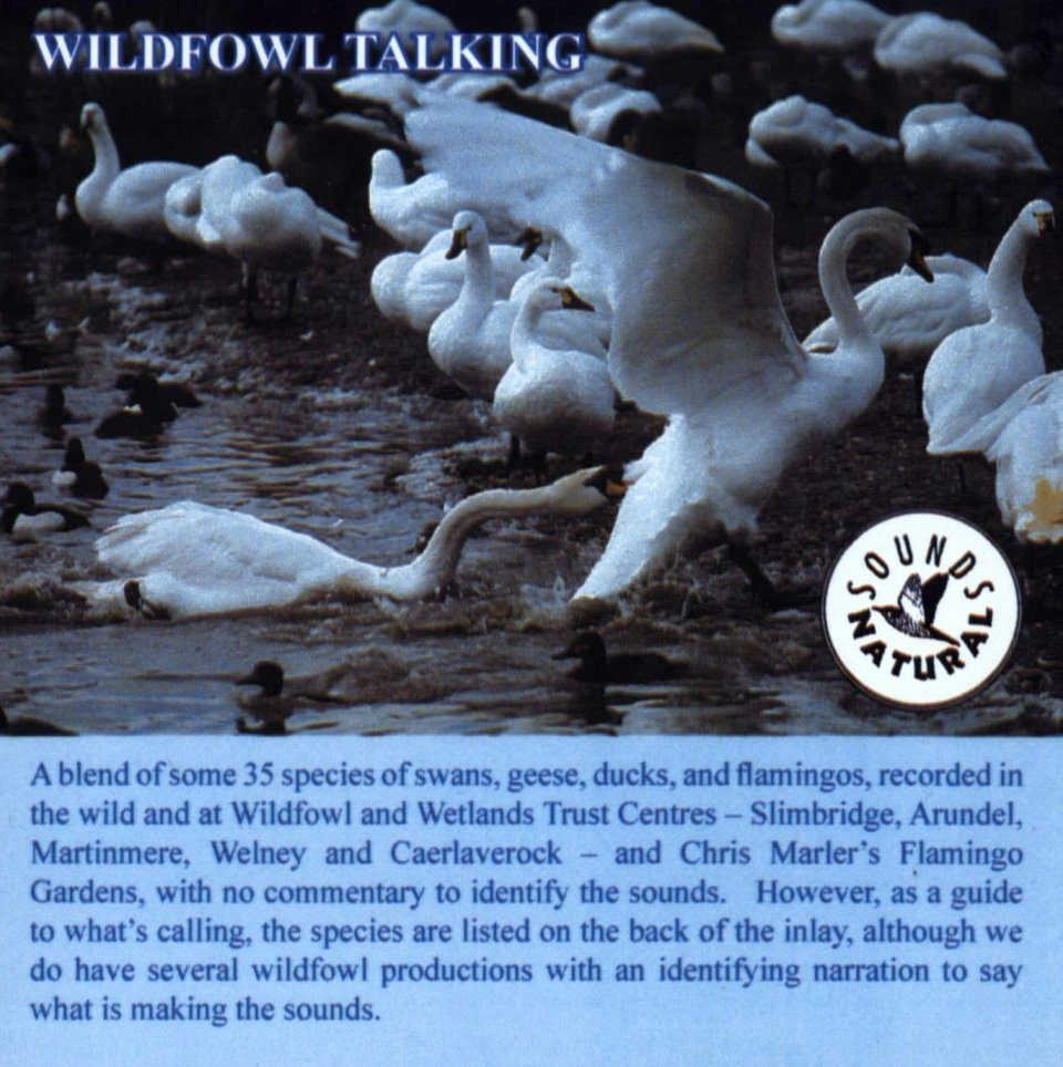 Wildfowl Talking