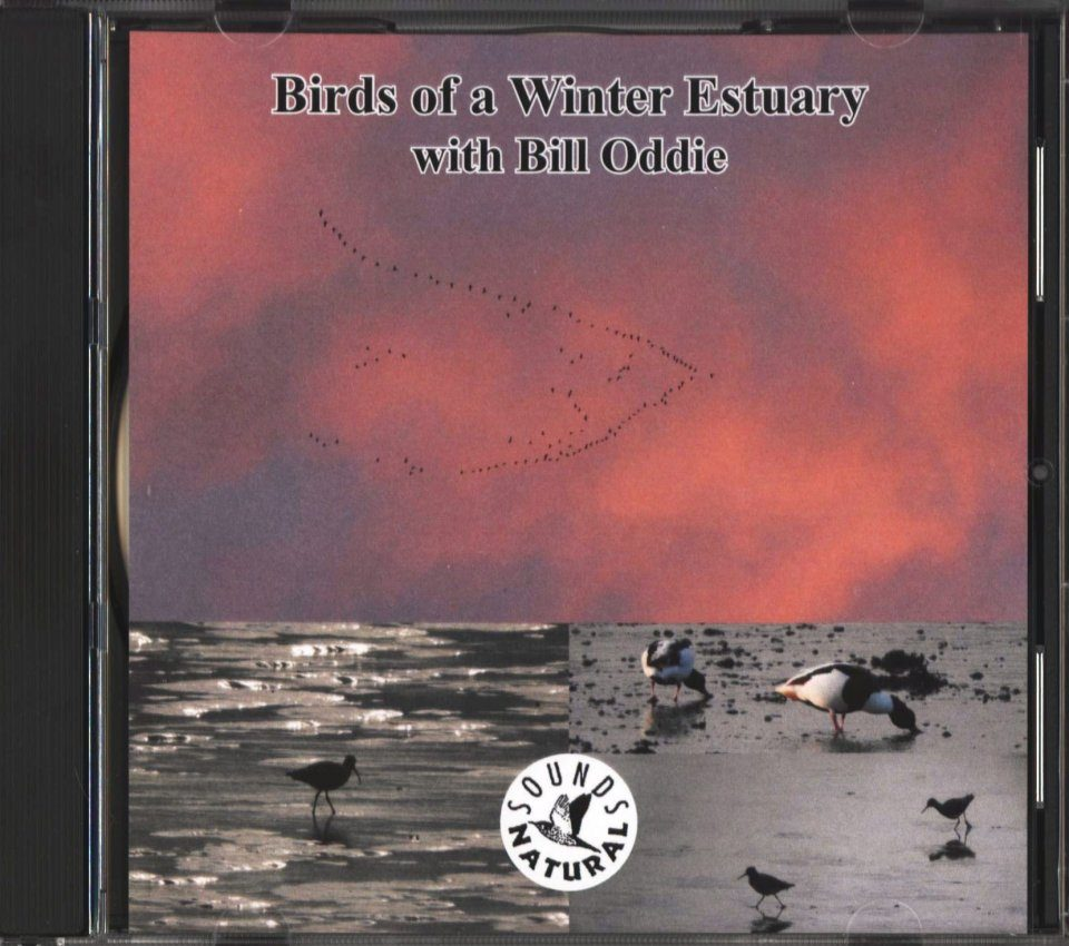 Birds of a Winter Estuary