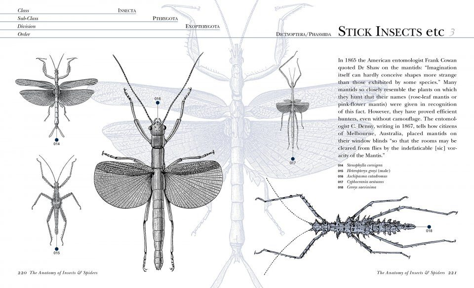 Ponsonby\'s Curious Compendium: Insects & Spiders: Claire Beverley ...