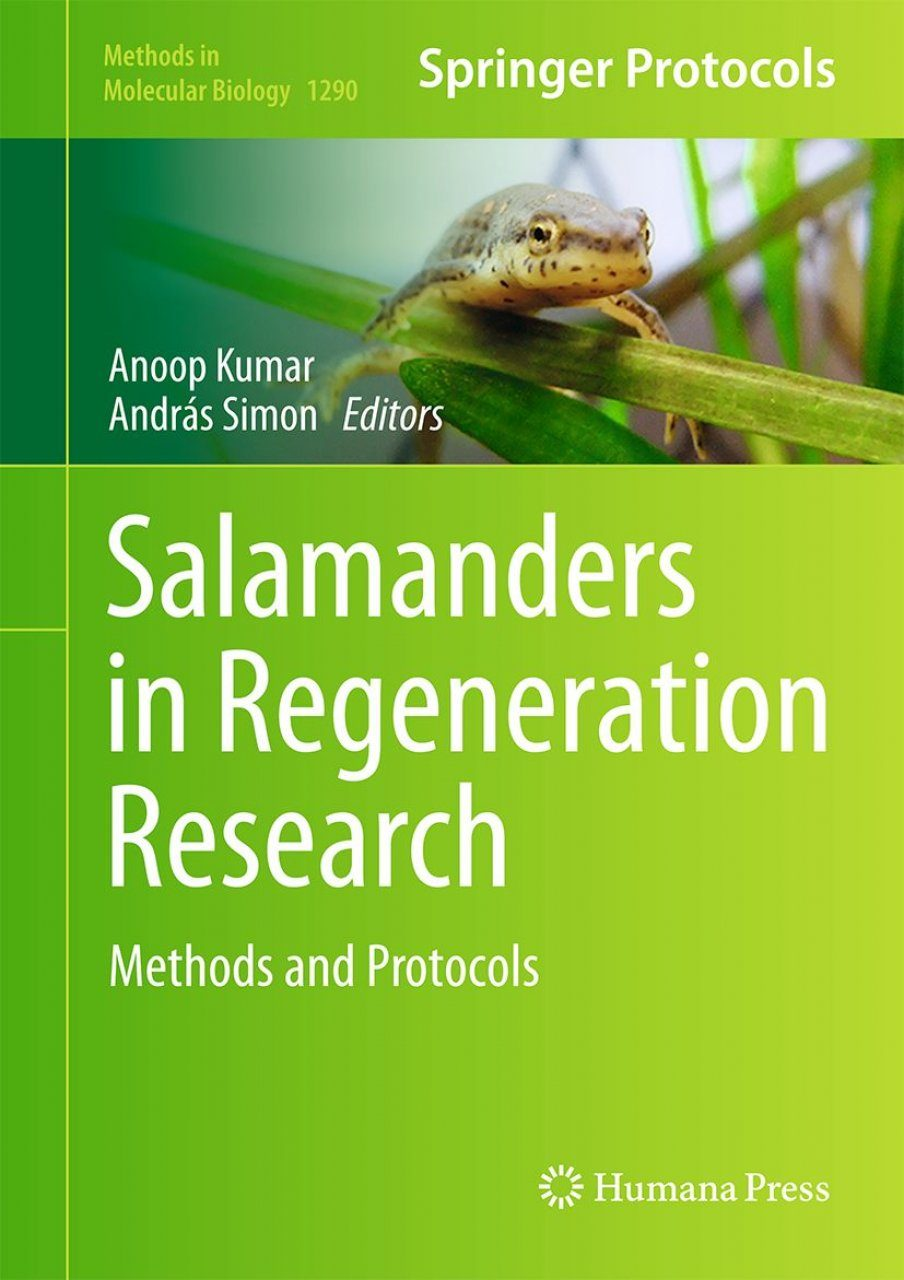Salamanders in Regeneration Research