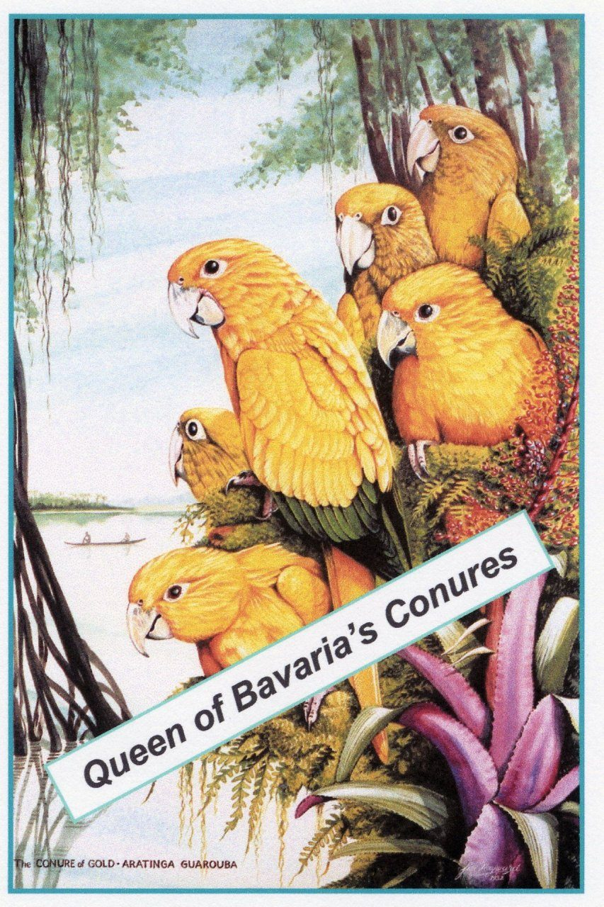 The Conure of Gold (Booklet + Poster)