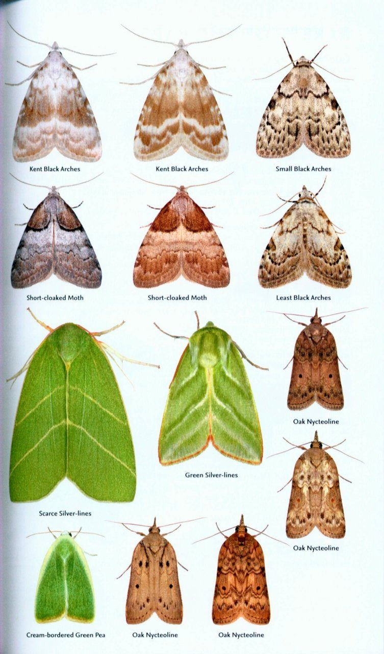 Collins Complete Guide to British Butterflies & Moths: A Photographic Guide to Every Common ... - photo#39