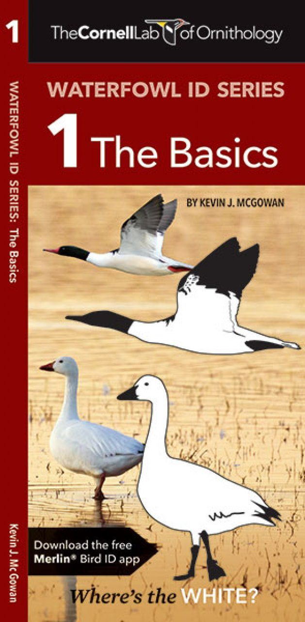 Cornell Lab of Ornithology Waterfowl ID: #1 The Basics