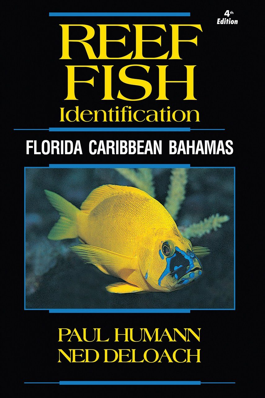 Reef Fish Identification