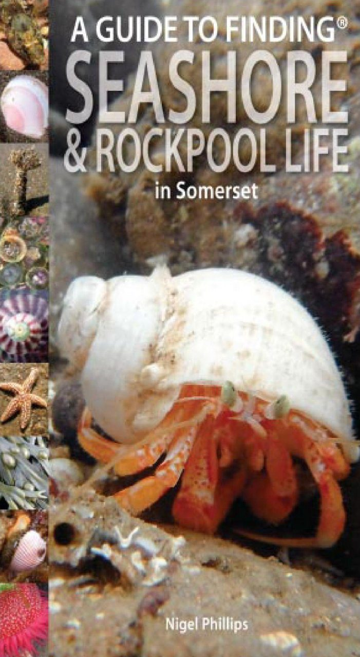 A Guide to Finding Seashore & Rockpool Life in Somerset