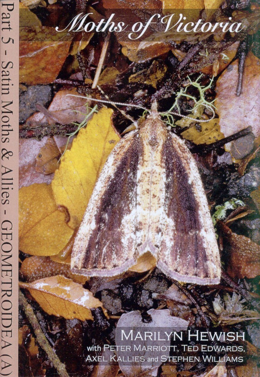 Moths of Victoria, Part 5: Satin Moths and Allies – Geometroidea (A)