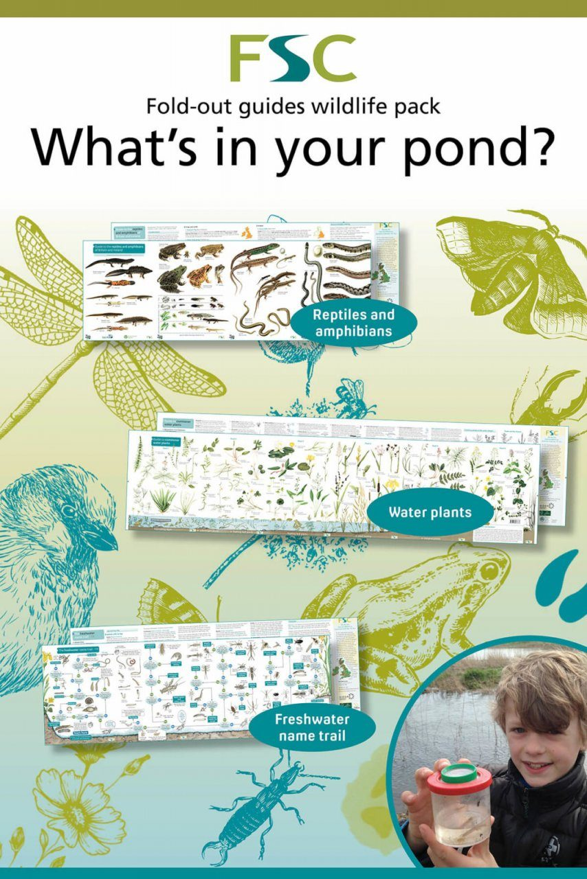 FSC Wildlife Pack 6: What is in your Pond?