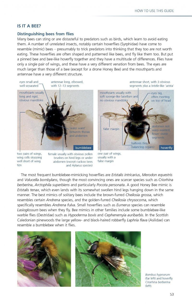 British bee guide: how to identify, where to spot, and how ...