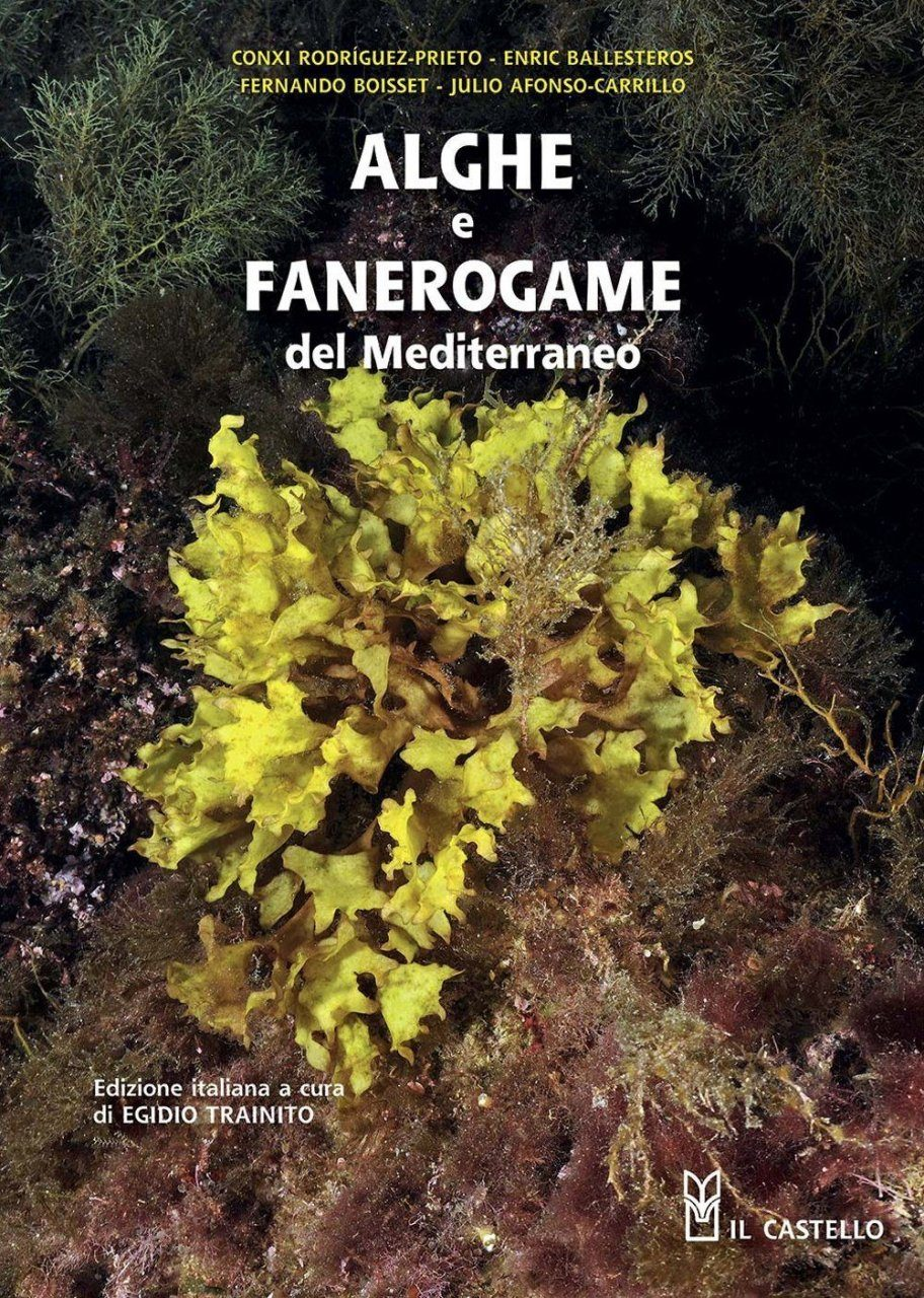 Alghe e Fanerogame del Mediterraneo [Algae and Phanerogams of the Mediterranean]