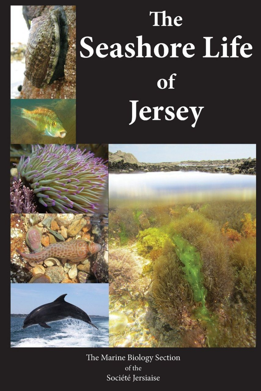 The Seashore Life of Jersey