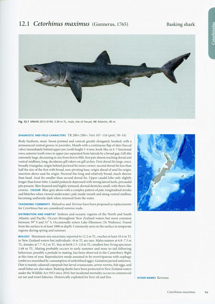 The fishes of new zealand a comprehensive guide 4 volume set the fishes of new zealand a comprehensive guide 4 volume set sciox Gallery