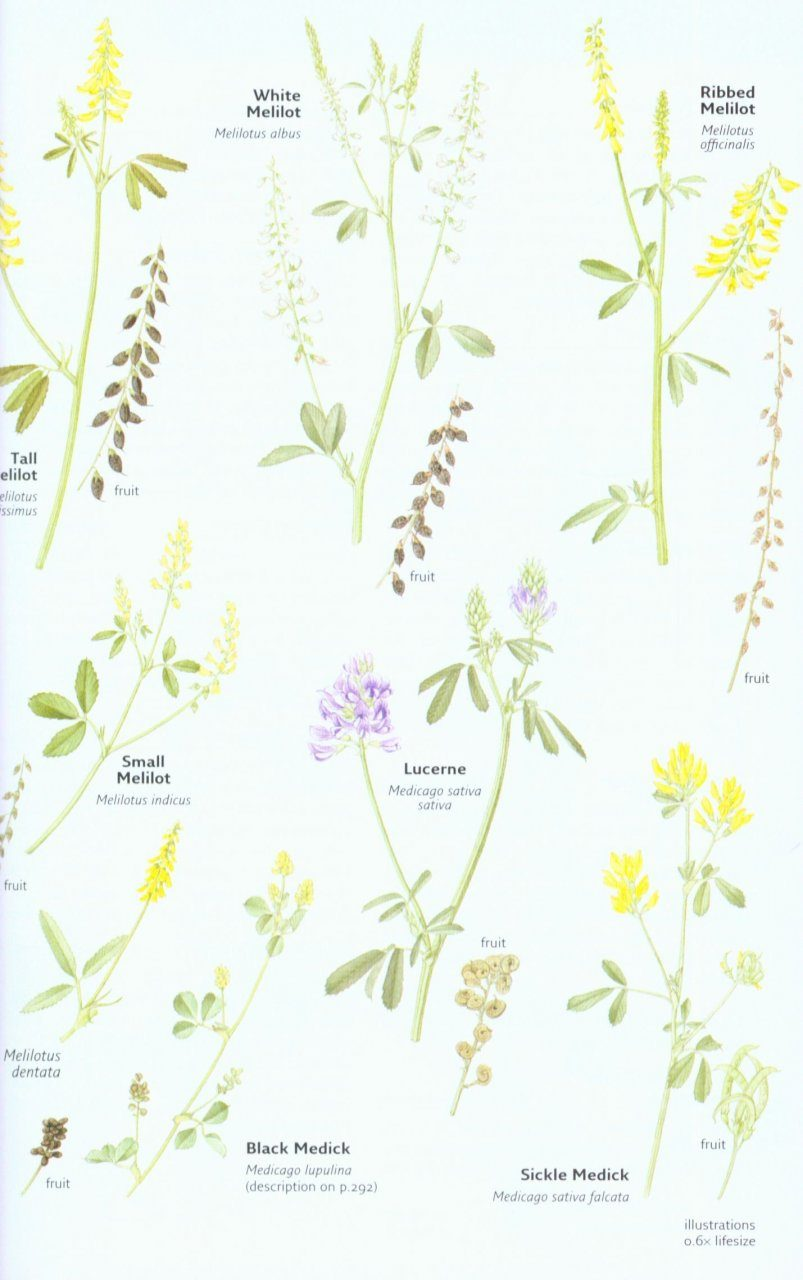 Collins Wild Flower Guide Nhbs Field Guides Natural History