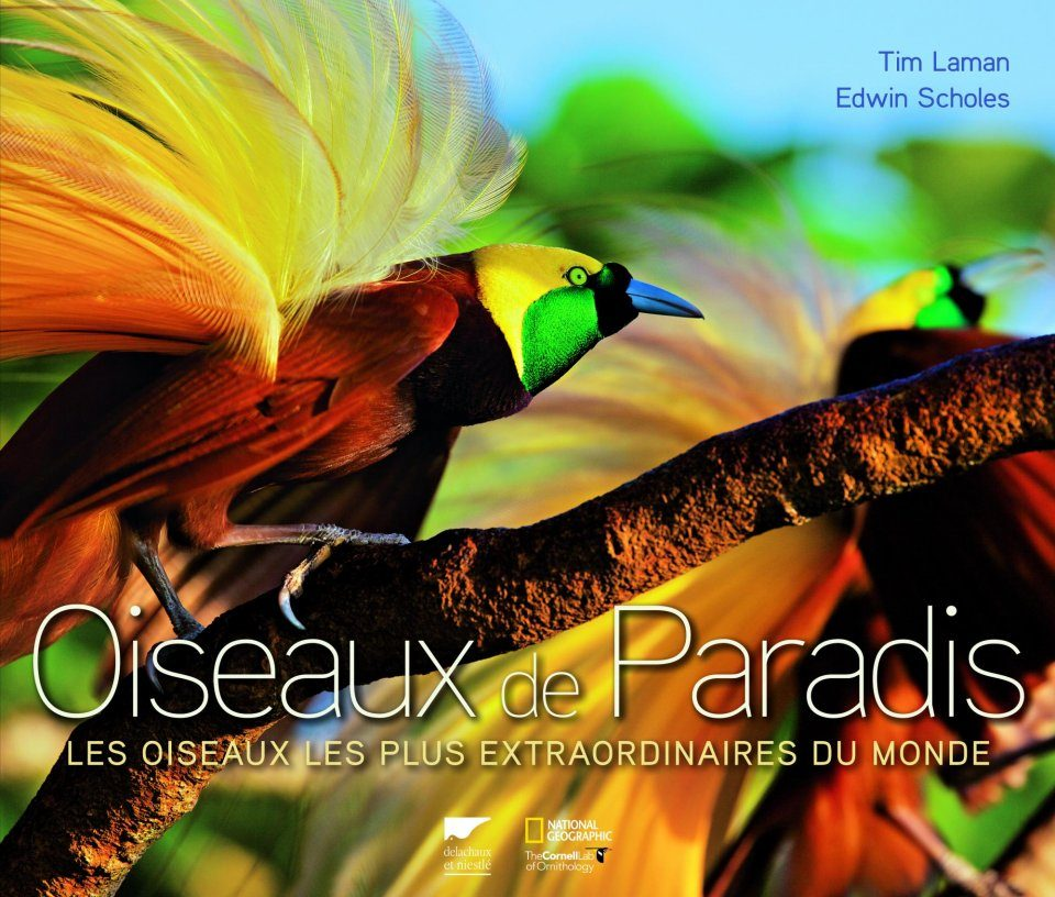 Oiseaux de Paradis: Les Oiseaux les Plus Extraordinaires du Monde [Birds of Paradise: Revealing the World's Most Extraordinary Birds]