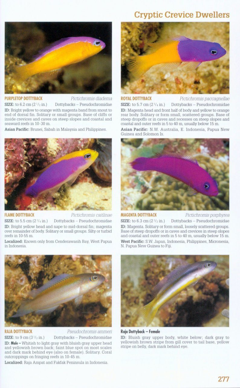 reef fish identification tropical pacific nhbs field guides
