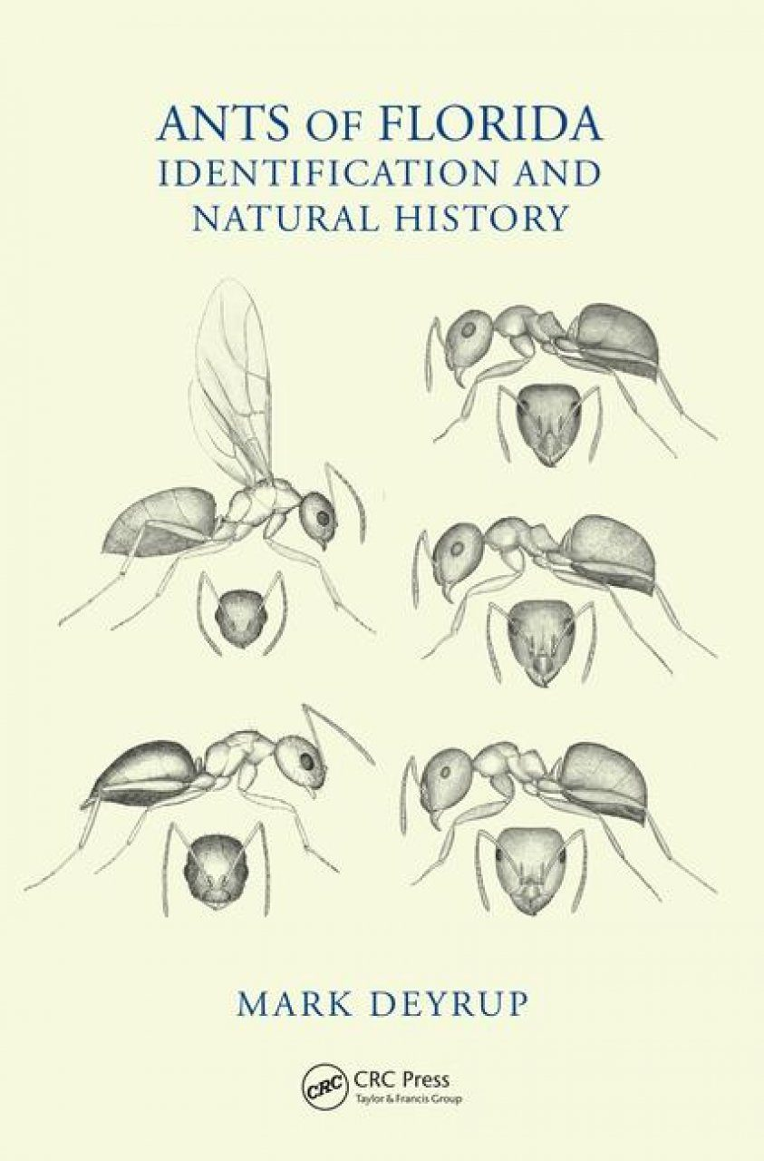 Ants Of Florida Identification And Natural History