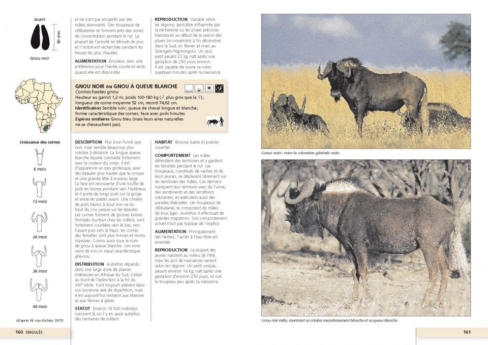 Guide Photo des Grands Mammifères d'Afrique [Field Guide
