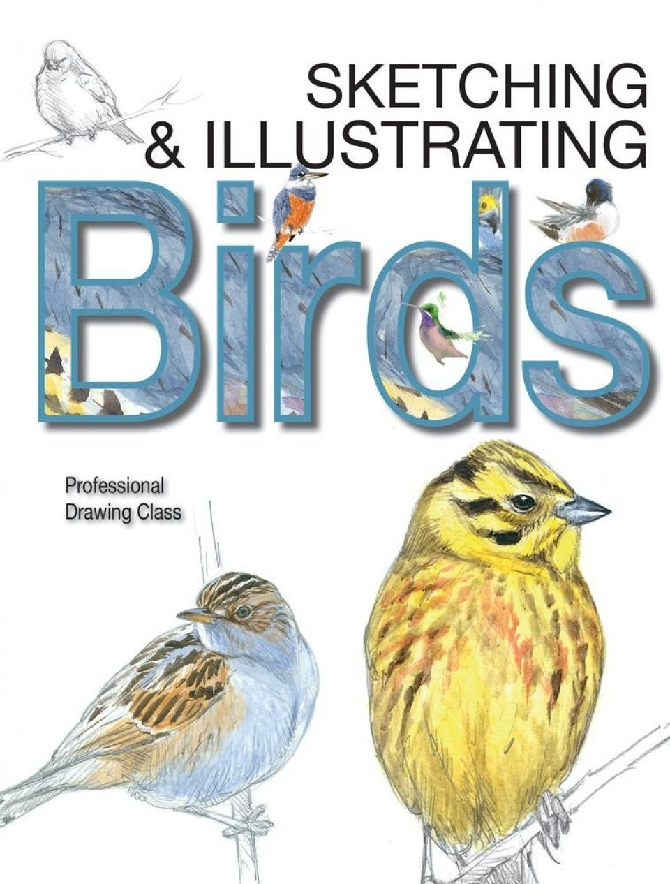 Sketching & Illustrating Birds
