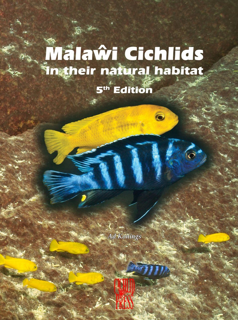 Malaŵi Cichlids in Their Natural Habitat