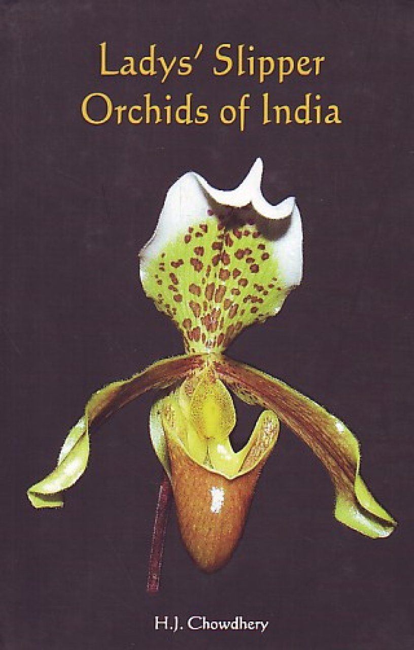 Lady's Slipper Orchids of India