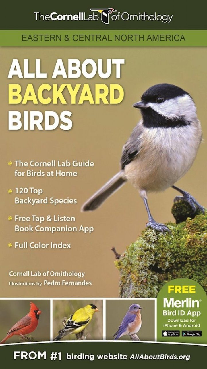 All About Backyard Birds Eastern Central North America Nhbs