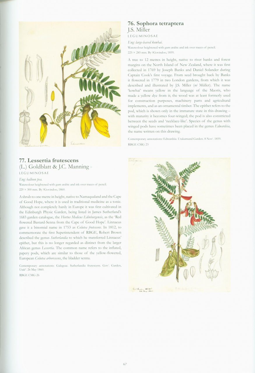 The Cleghorn Collection: South Indian Botanical Drawings, 1845 to ...