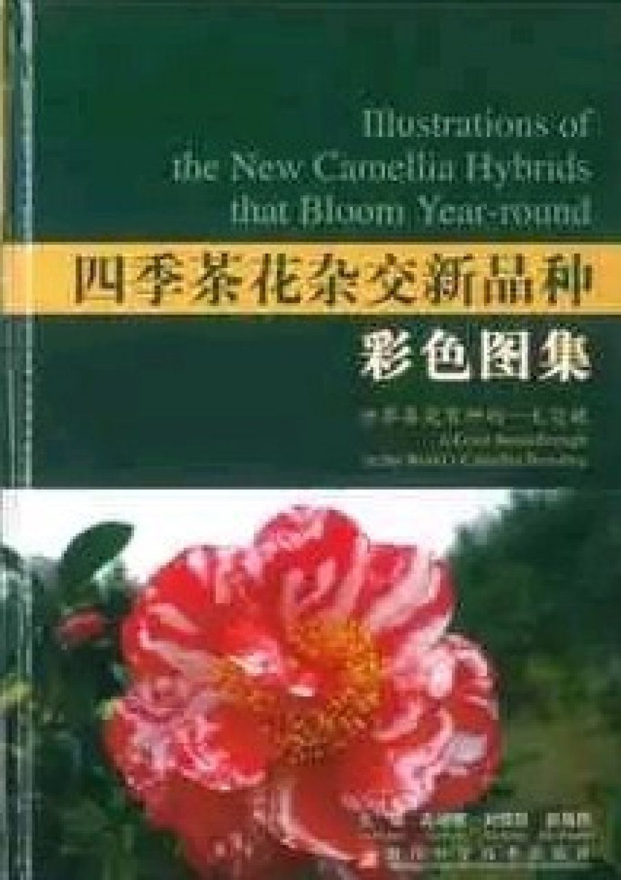 Illustrations of the New Camellia Hybrids that Bloom Year-Round [English / Chinese]