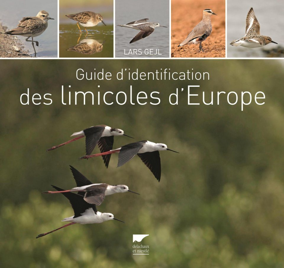 Guide d'Identification des Limicoles d'Europe [Waders of Europe]