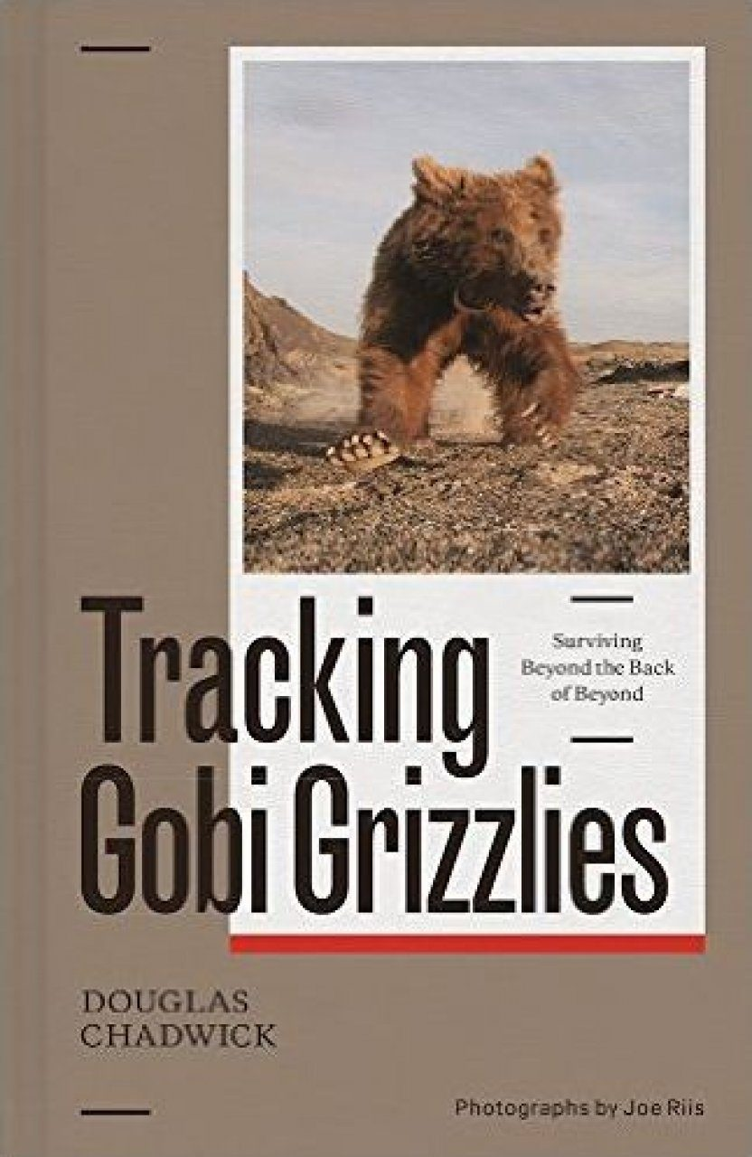 Tracking Gobi Grizzlies