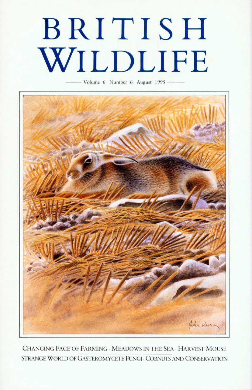 British Wildlife 06.6 August 1995
