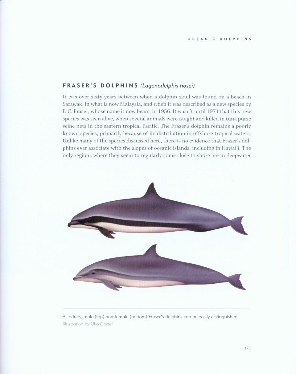 the lives of hawai u0027i u0027s dolphins and whales natural history and