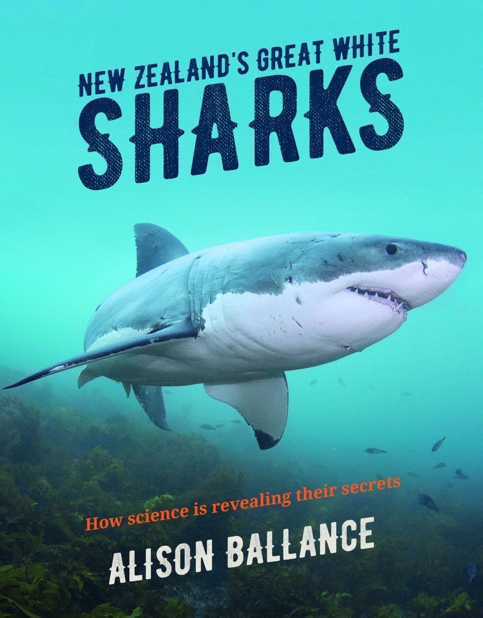 New Zealand\'s Great White Shark: How Science is Revealing Their ...
