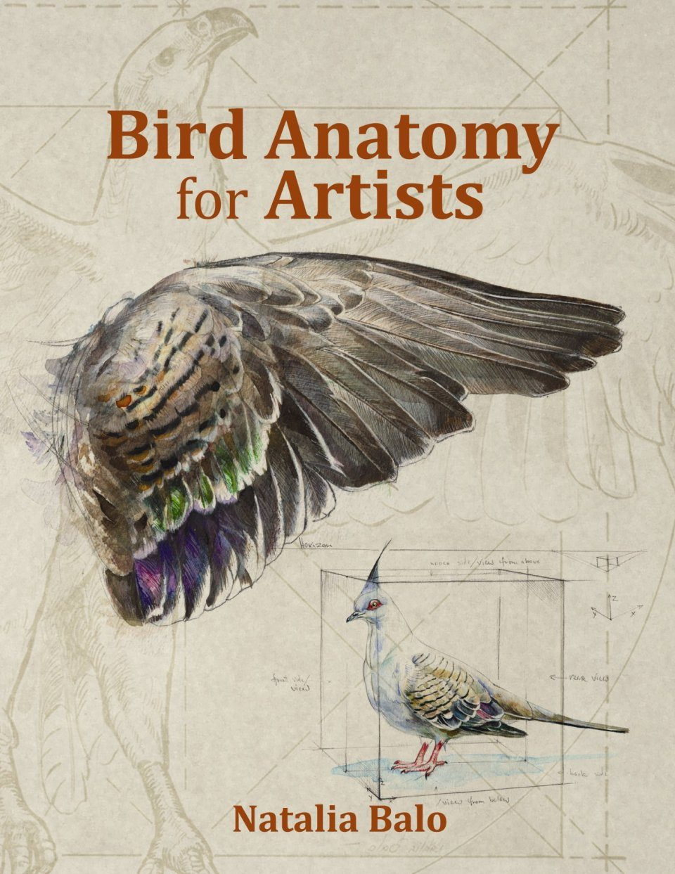 Bird Anatomy for Artists: Natalia Balo, Penny Olsen | NHBS Book Shop