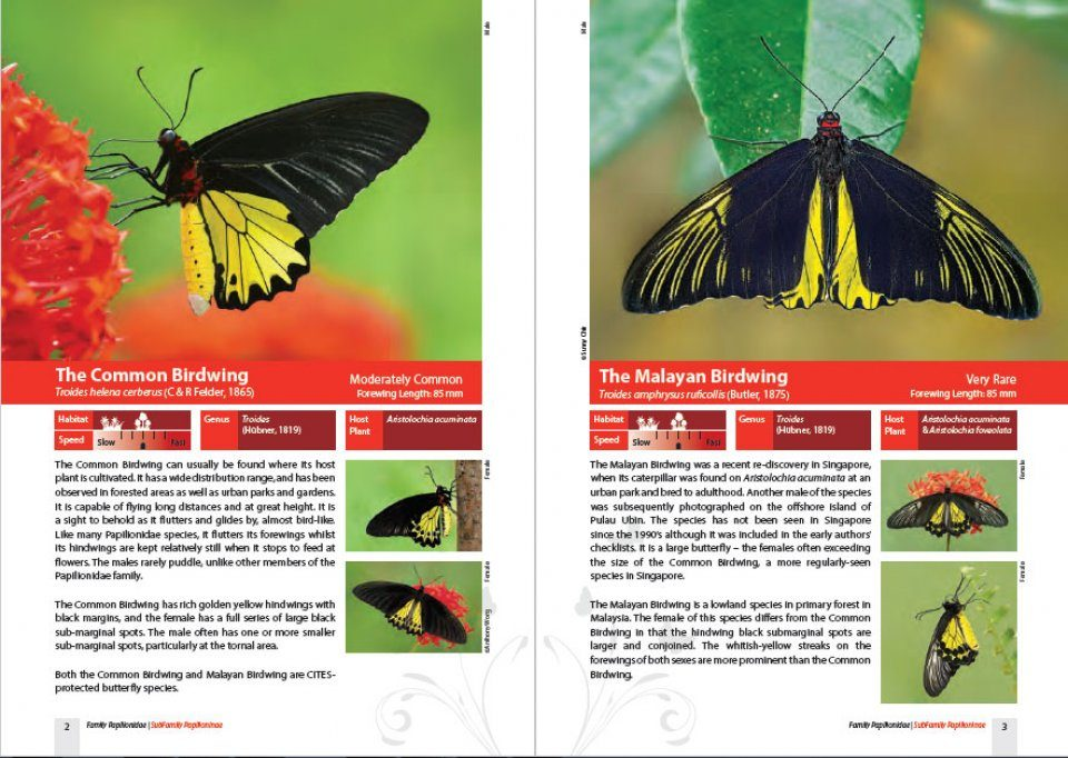 A Field Guide To The Butterflies Of Singapore Nhbs Field Guides
