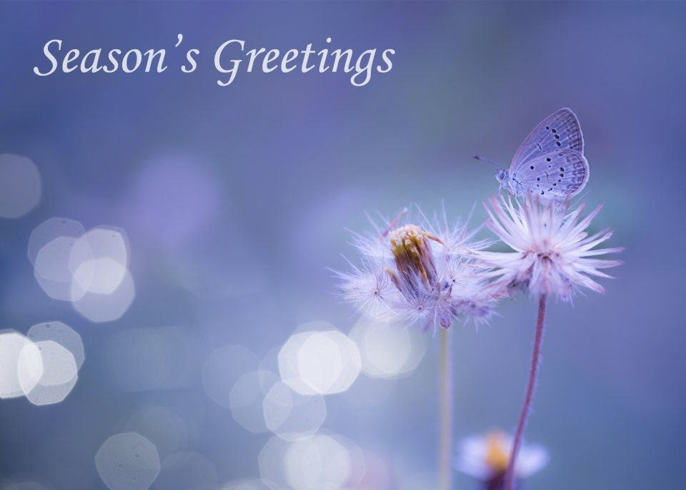 Blue Butterfly: Set of Ten Butterfly Conservation Christmas Cards