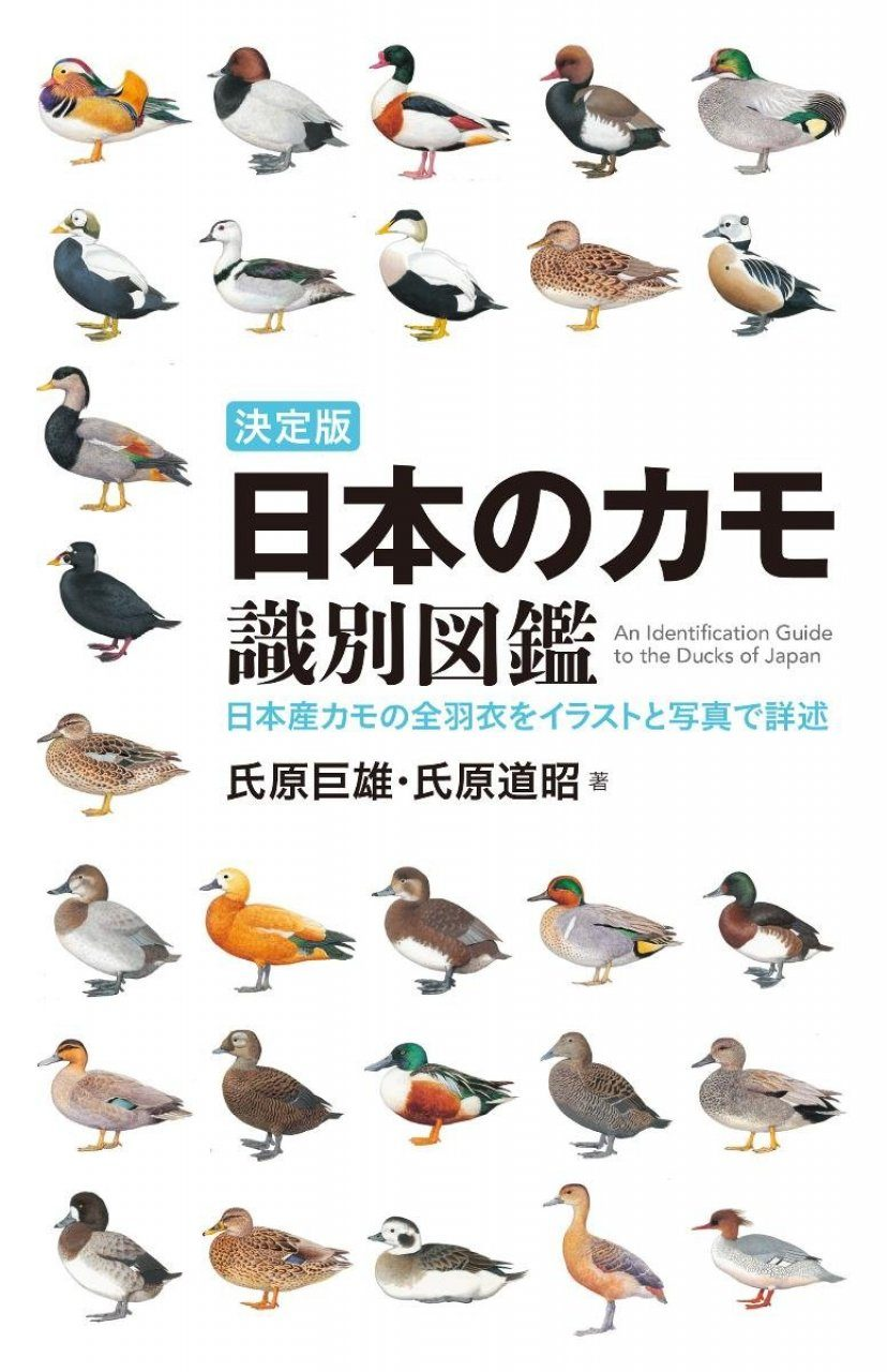 An Identification Guide to the Ducks of Japan [Japanese]
