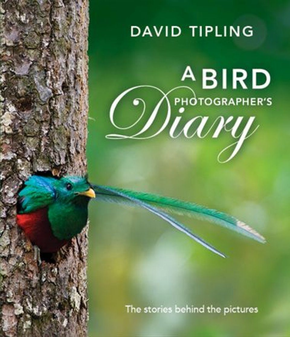 a bird photographers diary the stories behind the pictures