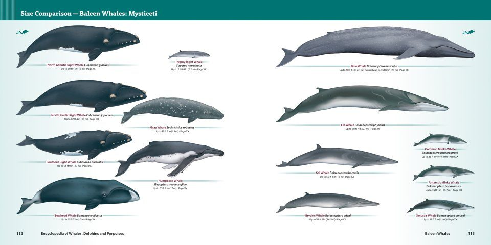 Encyclopedia of Whales, Dolphins and Porpoises