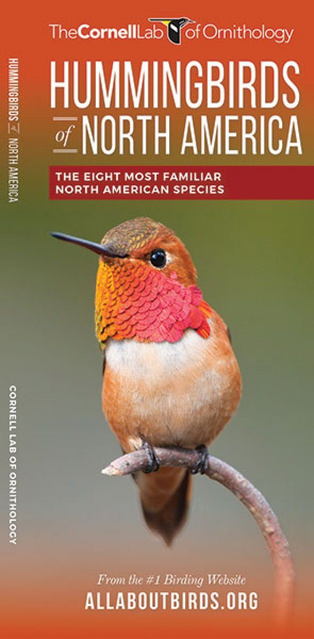 Hummingbirds of North America