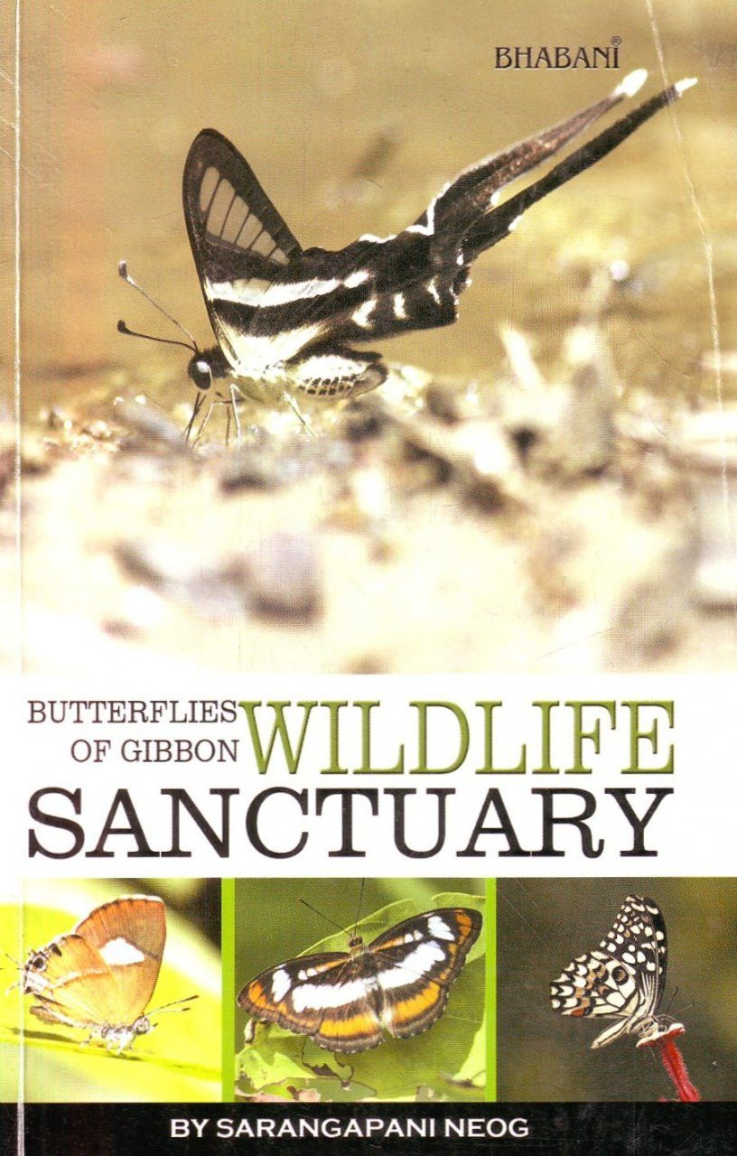 Butterflies of Gibbon Wildlife Sanctuary