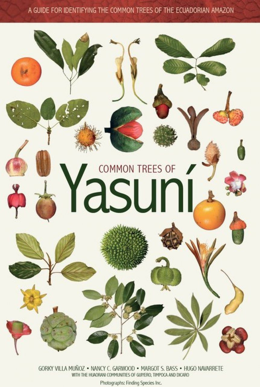 Common Trees of Yasuní