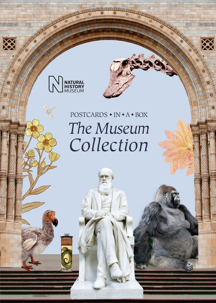 The Museum Collection
