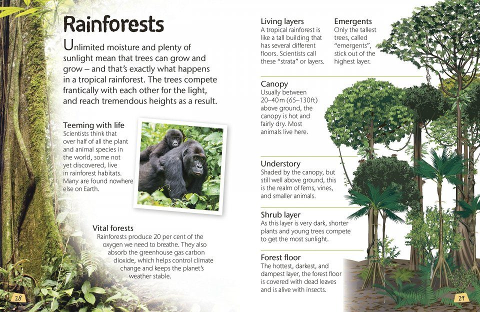 Woodland And Forests Explore Nature With Fun Facts Activities